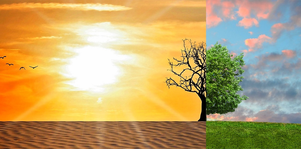 The right hand side of the picture is a lush green tree on a green field of grass, in contrast to the left side of the picture which shows a desert with a bare tree