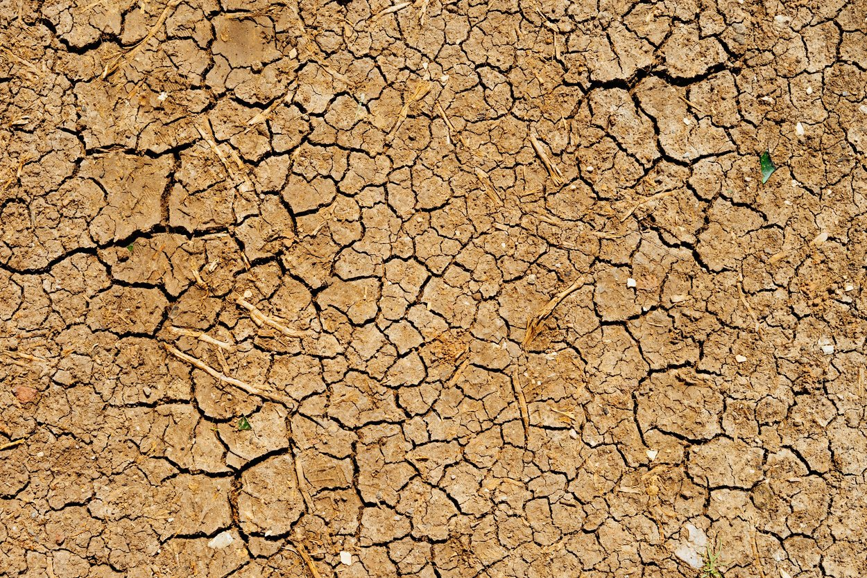 Very dry patch of earth suffering from a drought. The ground is cracked all over and nothing is growing there.
