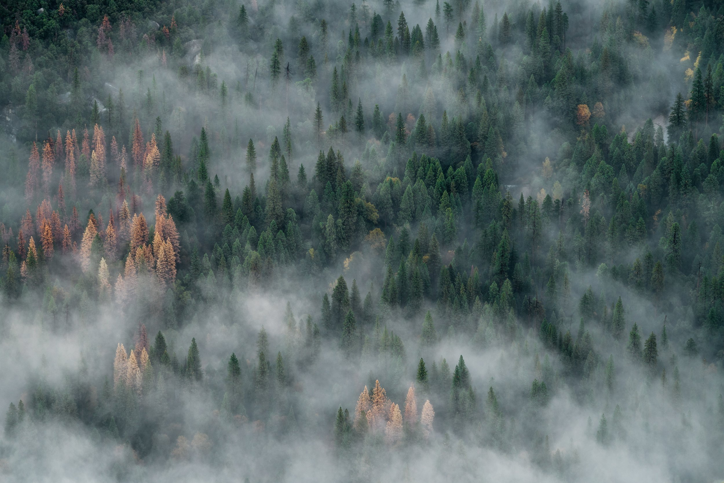 Smoke from a wildfire nearly obscuring an aerial picture of a forest